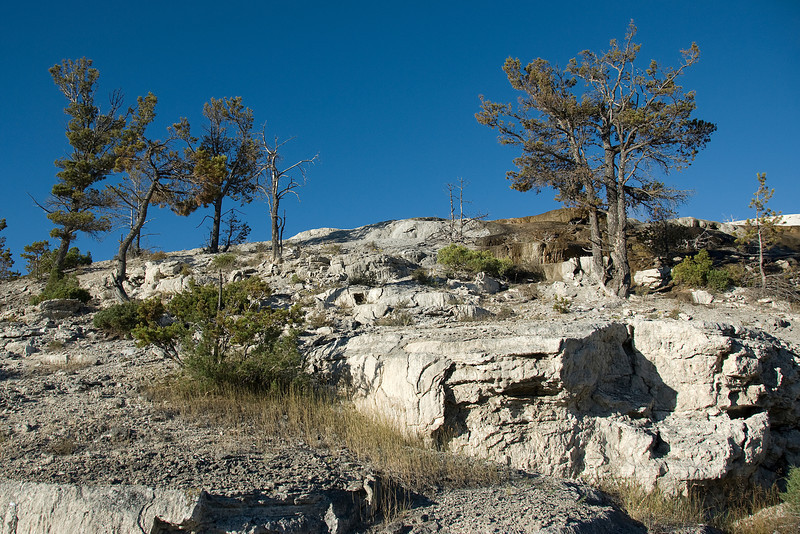 Terraces of Mammoth Hot Springs, Yellowstone National Park