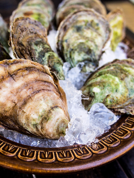 oysters 4.jpg
