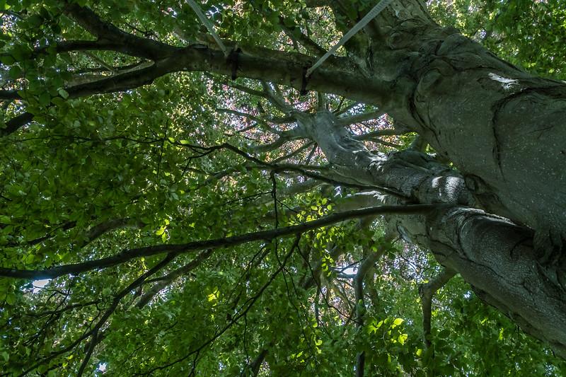 Ian Peters - Fresh Air -5190.jpg