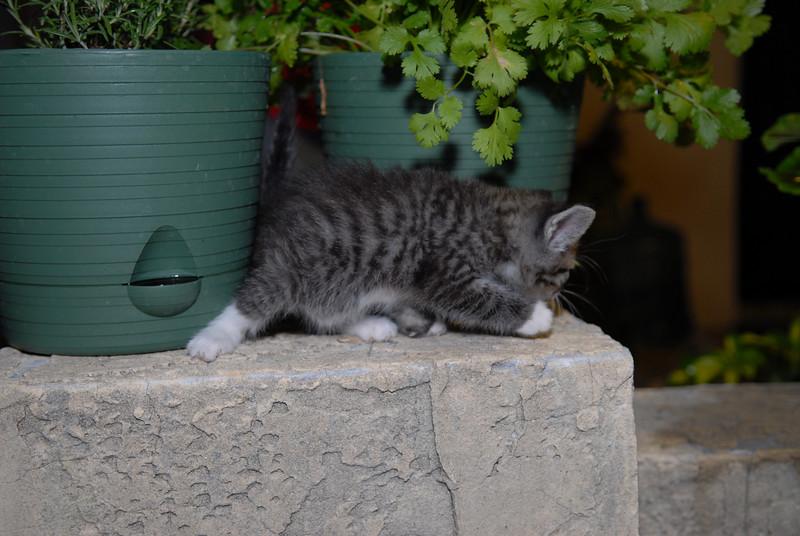 2007 04 12 - New Kitty 028.JPG