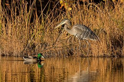 08500 Birds, shorebirds