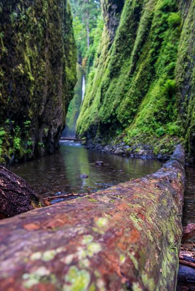 Cool log blocking the river
