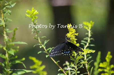 2011-Butterflies and Moths