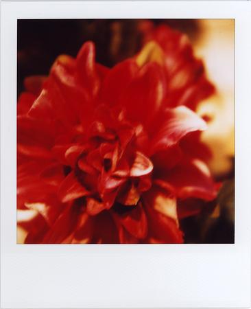 sx-70 blend photos