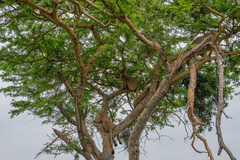 Uganda_T_QE-1879.jpg