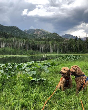 Lake Eileen hike with Sherman and Elbert July 9 2021