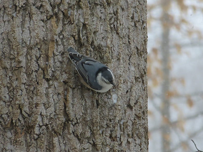 Winter 2014 Birds