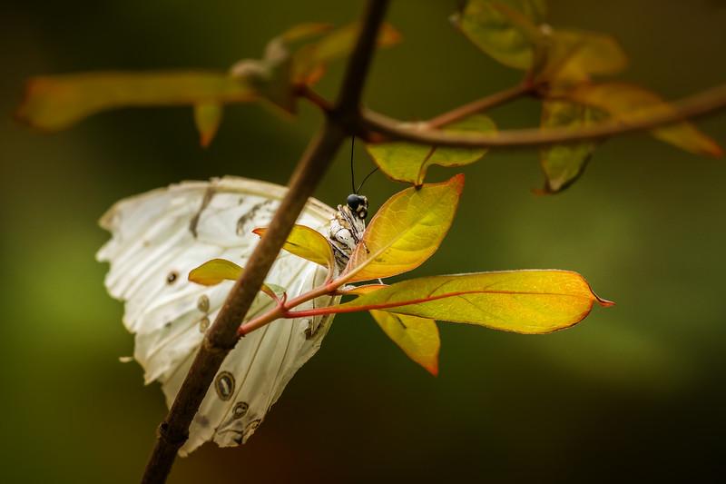 Butterfly-033.jpg