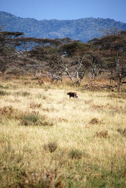 Serengeti (130).JPG