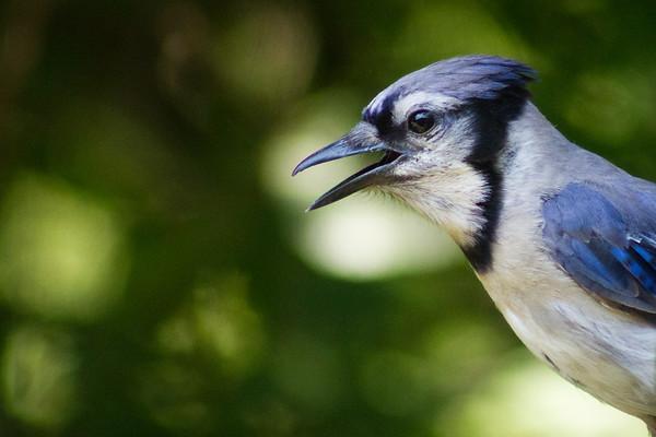 MN Birds