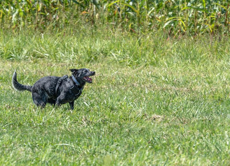10 Sep 3 Sadie at Mikes (1 of 1).jpg