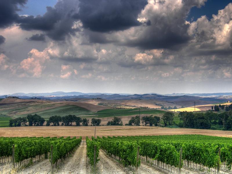 Vineyard - Somewhere in Chiantishire, Tuscany, Italy - July 2009