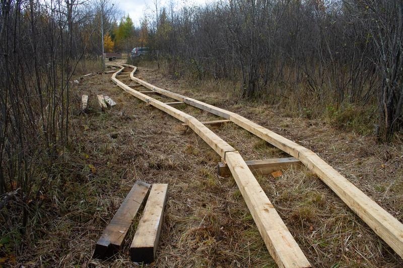 Fringed Gentian Bog Auggie's Boardwalk Fermoy Road Sax-Zim Bog MN IMG_2377.jpg
