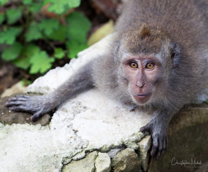 monkey_road.jpg