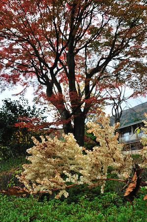 Fall in Hakone 2011・箱根の晩秋2011