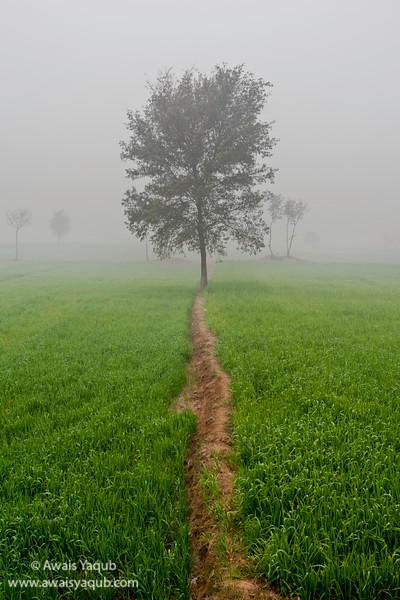 The Walking Tree