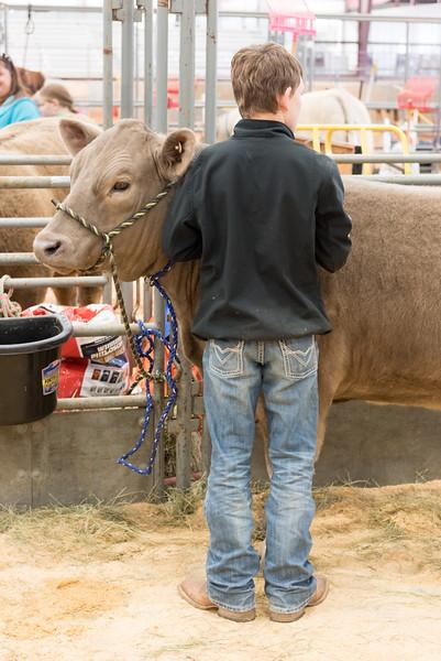 Hays-County-Show-6037.jpg