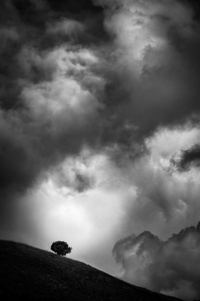 Tree under dark Clouds