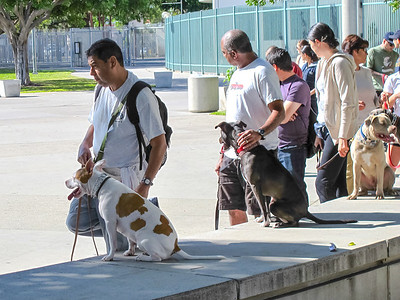 LA Coliseum Dog Training 03-2012