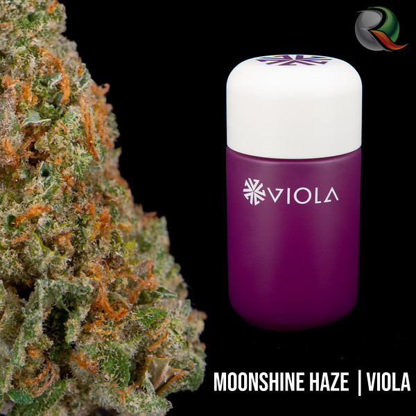 moonshine haze.jpg