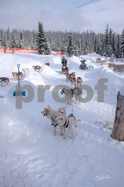 dog sled 6.jpg