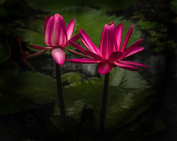 McKee Botanical Gardens - Vero Beach, FL - 2021
