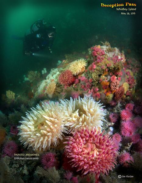 5.28.16 Maya & anemones 2 S .jpg
