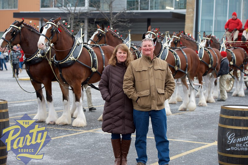 Clydesdale Portraits 7.jpg