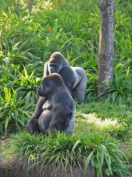 Gorillas   (Apr 23, 2005, 08:54am)