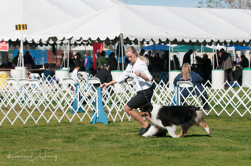 20170205_Australian Shepherds_Lost Dutchman Kennel Club-23.jpg