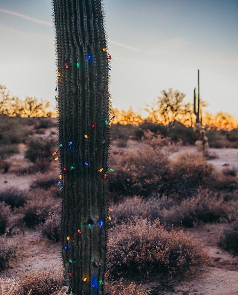 HolidayMini-SunshynePix-1191.jpg