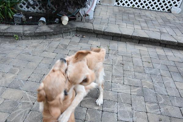 Kayla & Piper - July 23, 2015