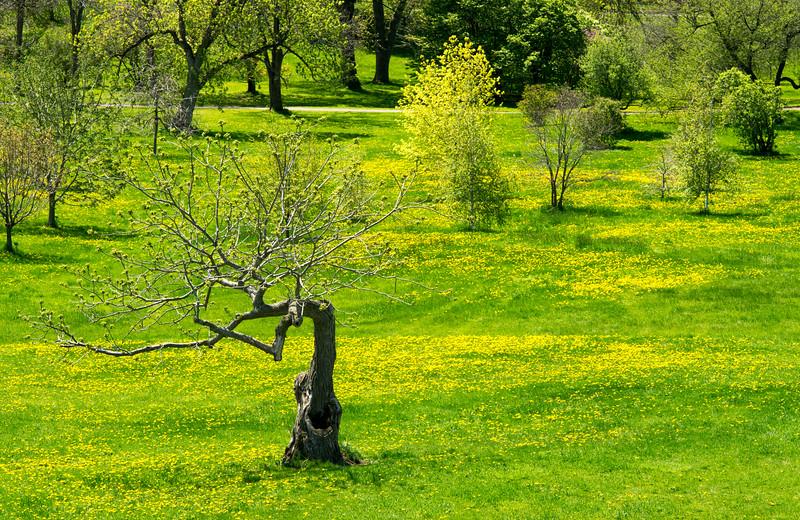 Arboretum in spring_May 11-2-12_01.jpg