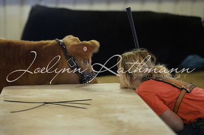 TCCA Heifer Show - Ringshots 2