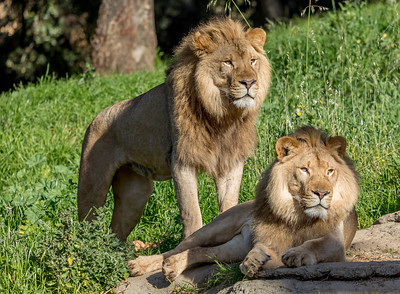 Oakland Zoo 020218