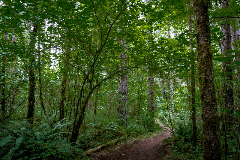 McDonald Forest - Corvallis, Oregon