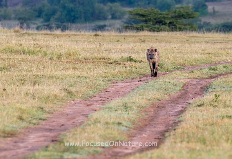 Hyena Approaches