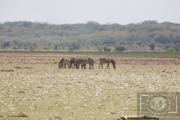 A Lake Manyara Selection