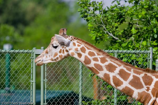 2007-06-01 Denver Zoo