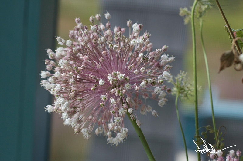 Flowers-5-2.jpg