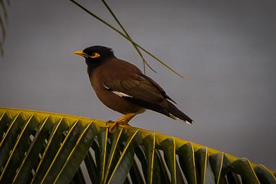 Maui 2014 Birds
