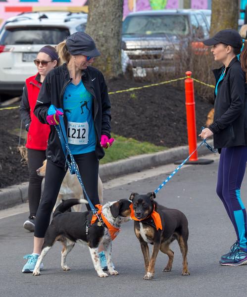 Richmond Spca Dog Jog 2018-635.jpg
