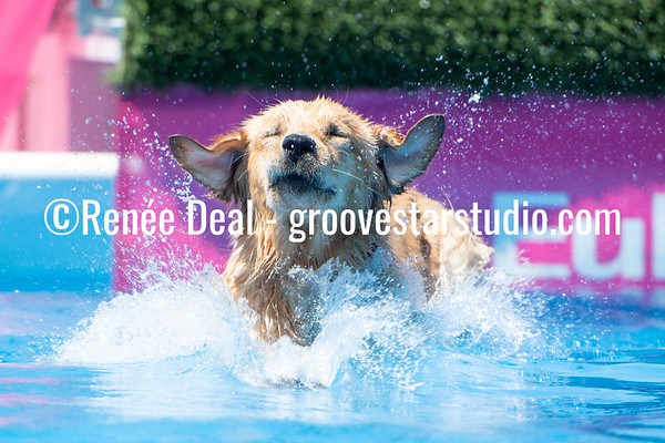 Diving Dogs Saturday 6/18/19