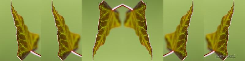 Leafvein.jpg