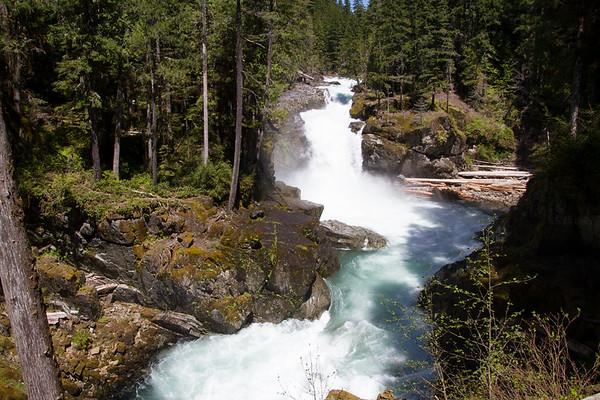 2017-05-28 Silver Falls Loop Trail, Ohanapecosh, Mt. Rainier National Park