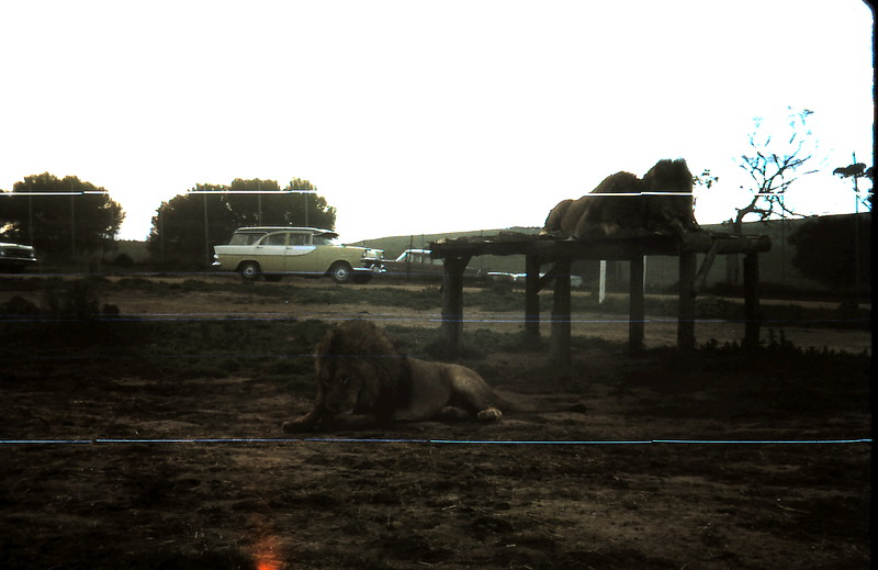 1973-4 (3) Open Zoo @ Bacchus Marsh.JPG