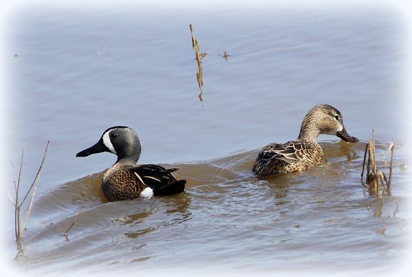 Birding 4/22/2013