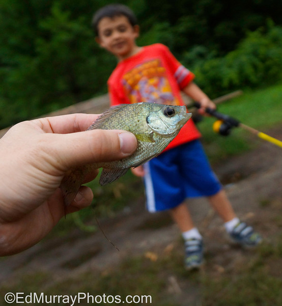 "The Big One that Didn't Get Away: I took the kids fishing and they boy caught his very first fish! (on his first cast). Talk to him in about 20 years and he'll tell you that the fish was 20 pounds and it took him nearly 2 hours to land it. (sorry about the lack of comments last week. I started to make some comments but then I got ""kicked out"" of the Daily Photos and I couldn't get back in. I let SM know and they're looking into it)  Happy Monday!   7/29/2013"