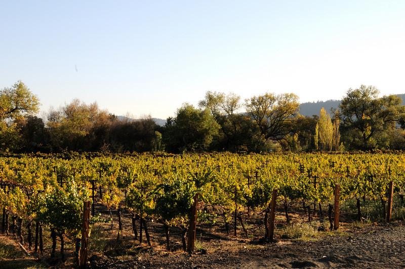 Alpha Omega Vineyard Napa, California
