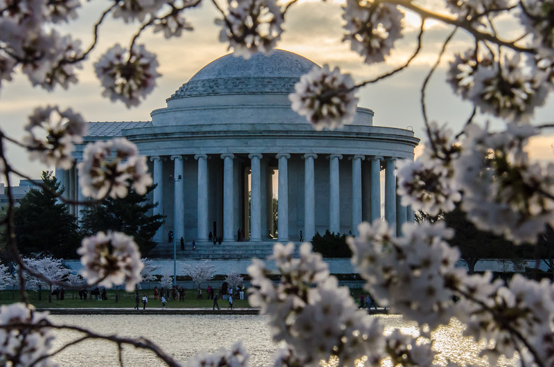 Cherry Blossom Tidal Basin Early Morning -21.jpg